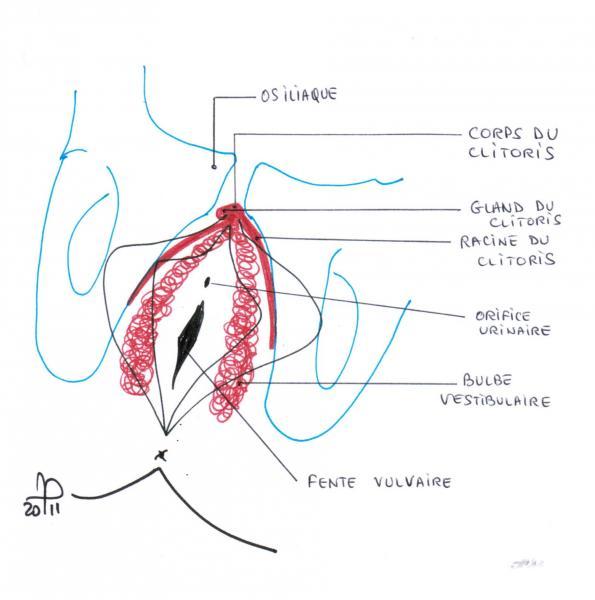 schema-clitoris-interne-osezleclito